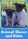animal shows
