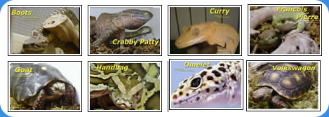 all types of reptiles and we have more!